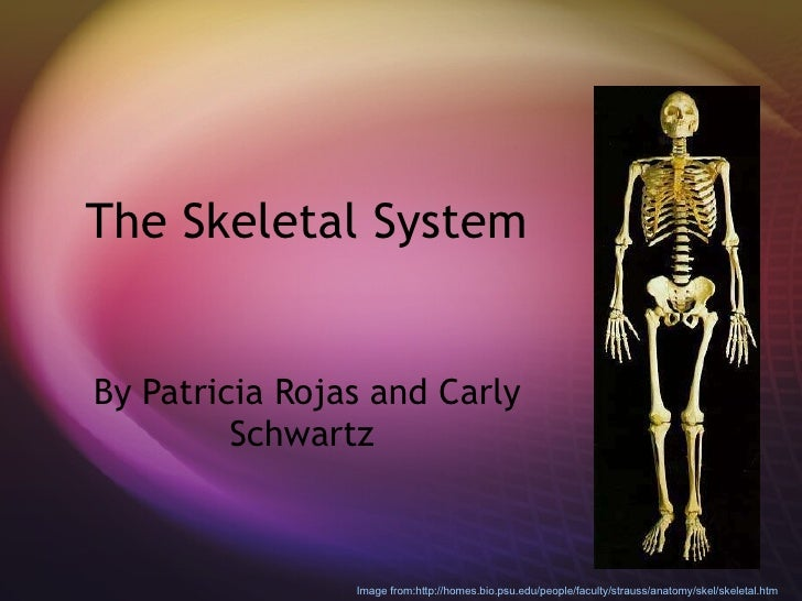 The Skeletal System  By Patricia Rojas and Carly Schwartz  Image from:http://homes.bio.psu.edu/people/faculty/strauss/anat...
