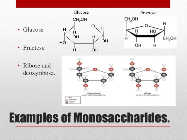 Carbohydrates Carbs Gcse Biology