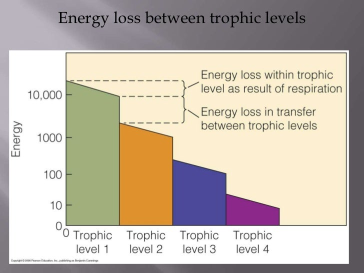 Efficency Of Trophic Levels