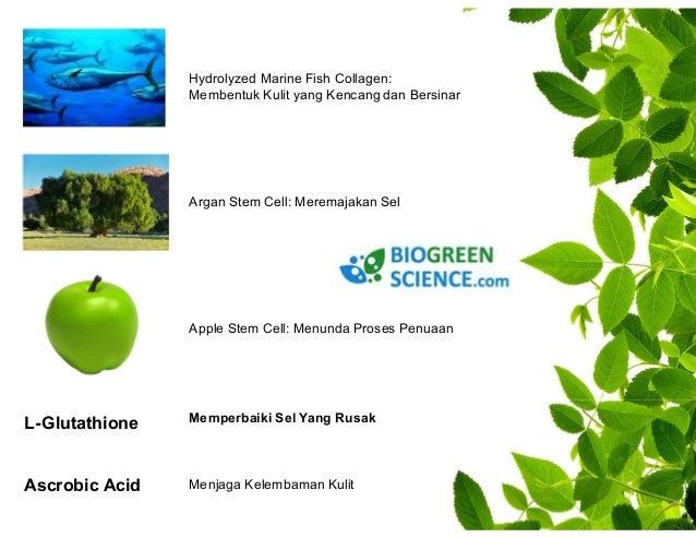 Apple stemcell : menunda proses penuaan  Grape stemcell : high content of polyphenols for UV protection  Alp rose stemcell...