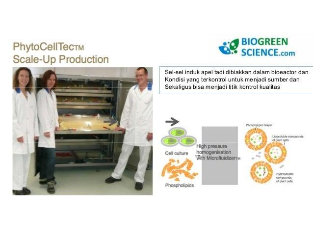 Argan membantu regererasi  sel fibroblast!!  Serat kolagen dan elastin
