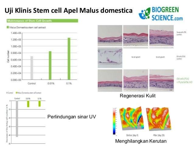 Hasil Uji Klinis Aswagandha KSM-66 membuktikan  1. Memperbaiki Mood 2. Memperbaiki Kualitas dan Kuantitas Sperma  3. Menin...