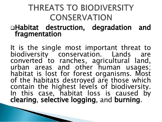 importance and threats of to biodiversity What is the importance of biodiversity 4  those are some of the big threats to biodiversity, and some of those are threats to other things, too.