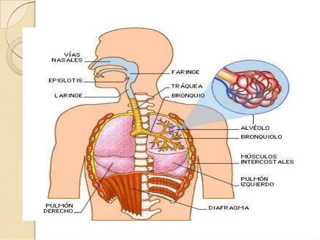 Bioquimica De La Respiracion