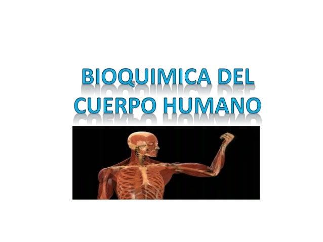 COMPOSICION QUIMICA DEL CUERPO HUMANO •  El ser humano está constituido por bioelementos, los cuales se clasifican en prim...