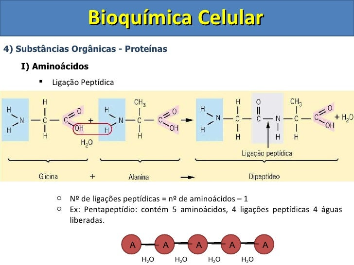 Bioquimica aula