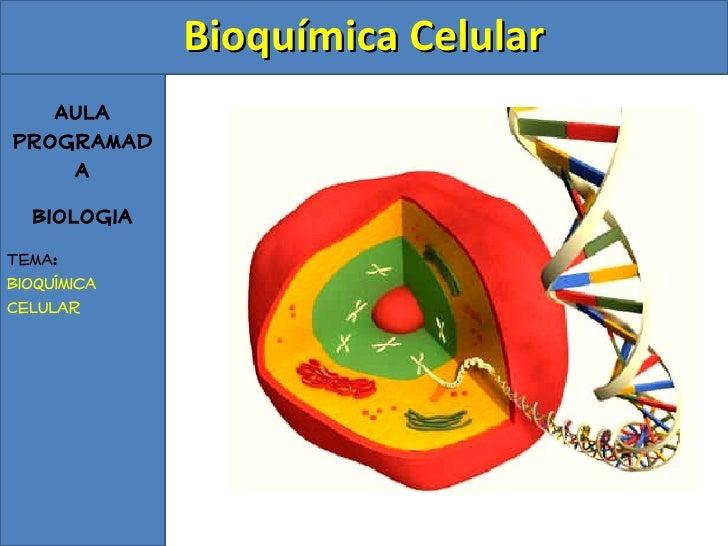 Aula Programada Biologia Tema: Bioquímica Celular <ul><ul><li>Bioquímica Celular </li></ul></ul>