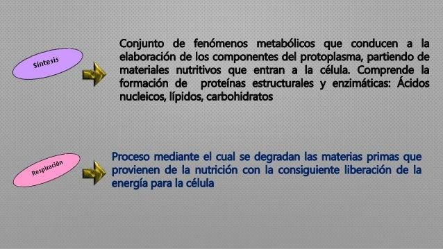 Bioquimica metabolismo tutorial #1