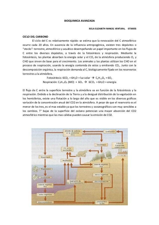 BIOQUIMICA AVANZADA ISELA ELIZABETH RANGEL VENTURA, 0730055 CICLO DEL CARBONO El ciclo del C es relativamente rápido: se e...