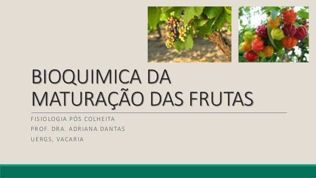 BIOQUIMICA DA MATURAÇÃO DAS FRUTAS FISIOLOGIA PÓS COLHEITA PROF. DRA. ADRIANA DANTAS UERGS, VACARIA