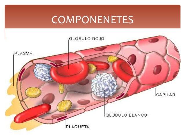 Bioquimica De La Sangre
