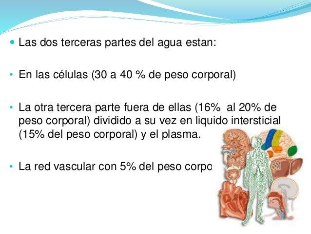  Las dos terceras partes del agua estan:  • En las células (30 a 40 % de peso corporal)  • La otra tercera parte fuera de...