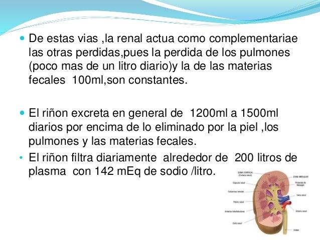  De estas vias ,la renal actua como complementariae  las otras perdidas,pues la perdida de los pulmones  (poco mas de un ...