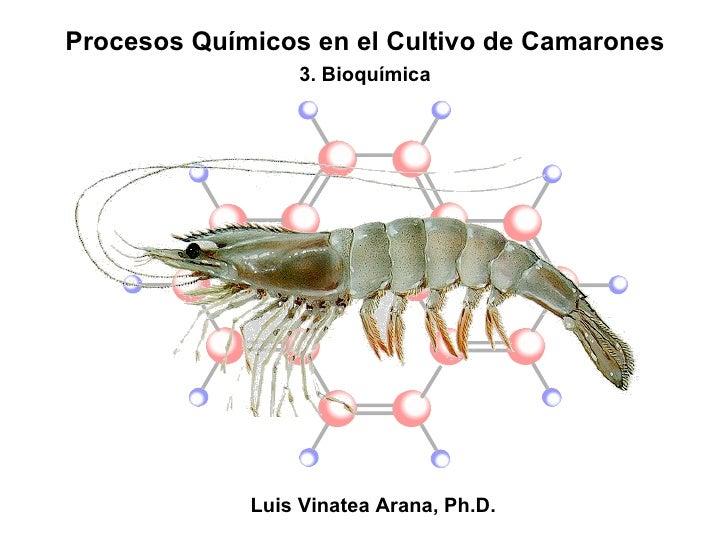 Procesos Químicos en el Cultivo de Camarones 3. Bioquímica Luis Vinatea Arana, Ph.D.