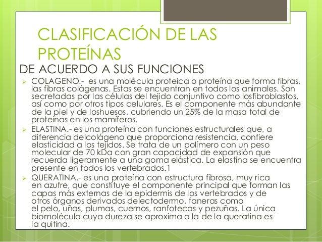 CLASIFICACIÓN DE LAS     PROTEÍNASDE ACUERDO A SUS FUNCIONES   COLAGENO.- es una molécula proteica o proteína que forma f...