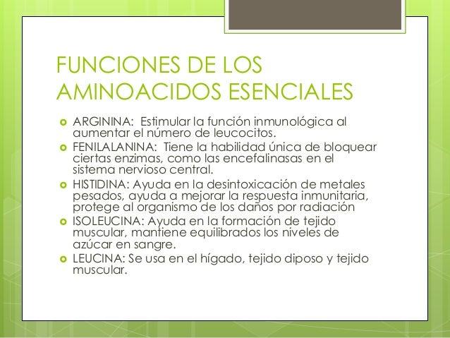 FUNCIONES DE LOSAMINOACIDOS ESENCIALES   ARGININA: Estimular la función inmunológica al    aumentar el número de leucocit...