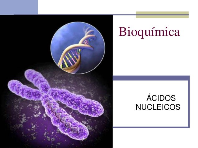 Bioquímica  ÁCIDOS NUCLEICOS