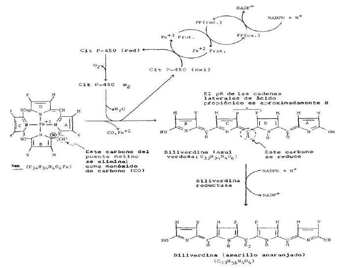 Bioquímica De La Bilirrubina