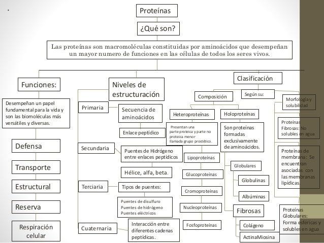 Mapa Conceptual De Proteinas