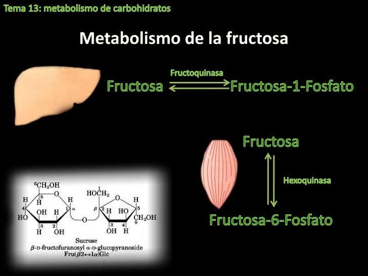 Como no definición de metabolismo