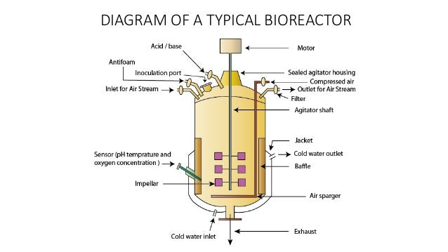 SPECIFICATIONS OF A BIOREACTOR A typical bioreactor consists of following parts: • Agitator – used for the mixing of the c...