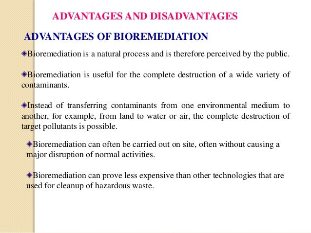 Bioremediation research papers