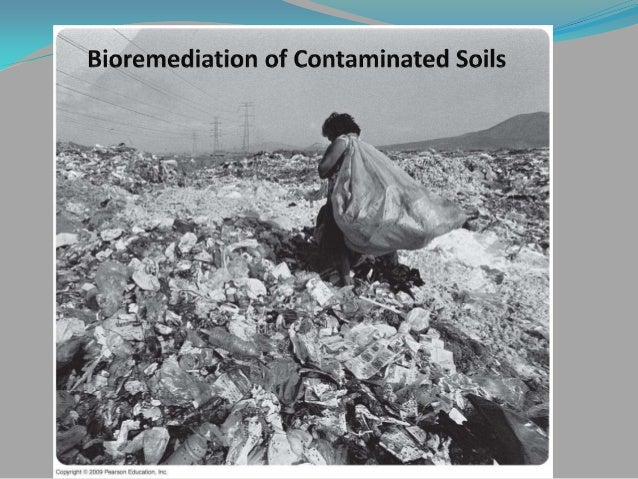 bioremediation of contaminated soil review of Metals form a large proportion of the pollution load of different contaminants present in the environment risks associated with pollution of soil by heavy metals for several years are an unavoidable phenomenon in us, metals pollution ranges from 45 to 70% of total pollutants in contaminated.