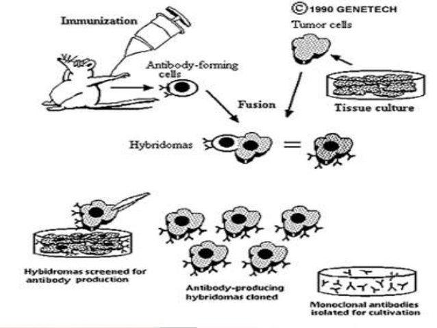 Modern Medical Biotechnology