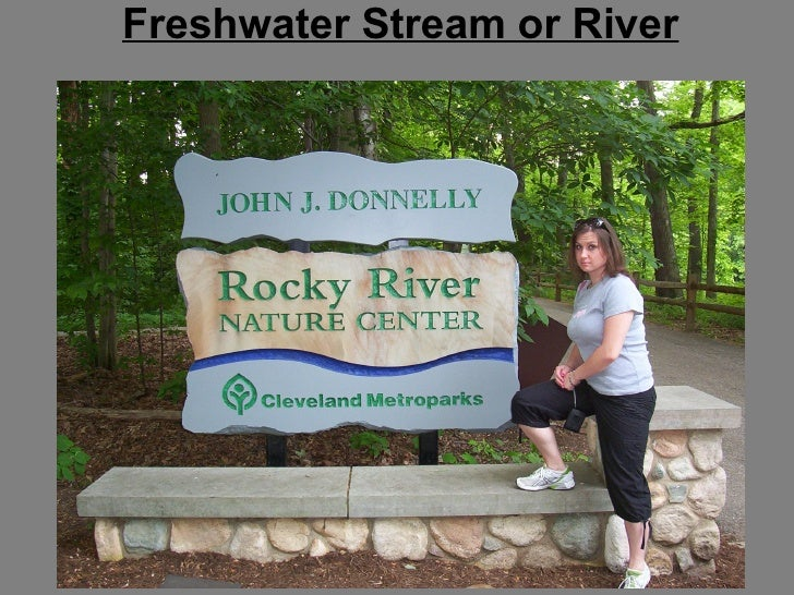 Freshwater Stream or River