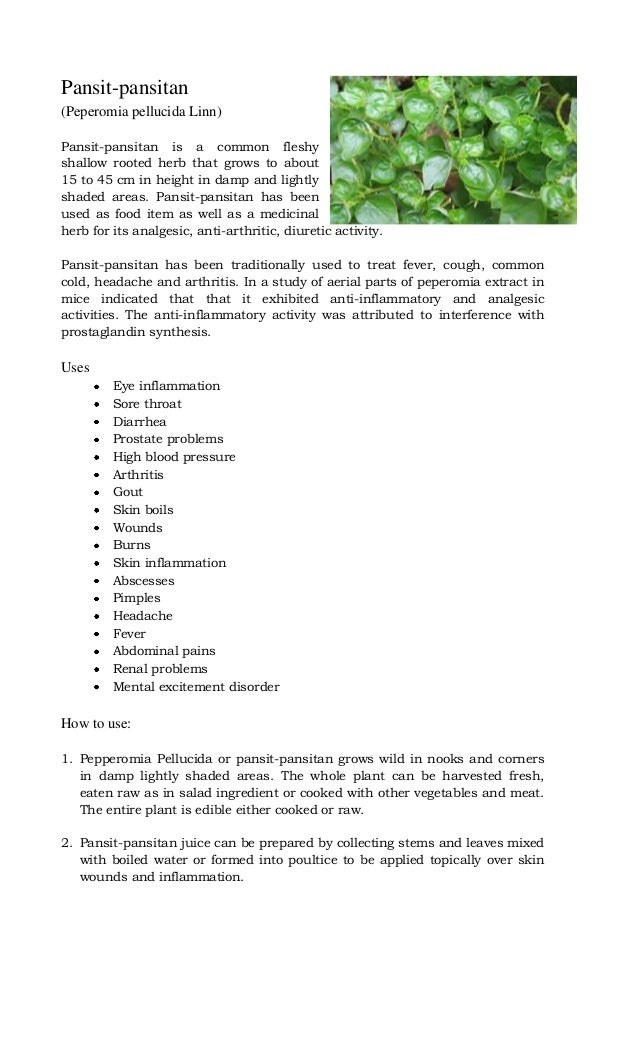 pansit pansitan medicinal uses