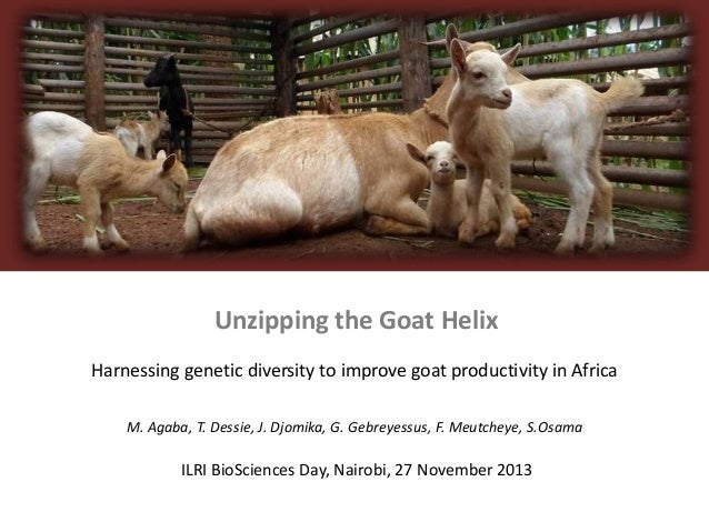 Unzipping the Goat Helix Harnessing genetic diversity to improve goat productivity in Africa M. Agaba, T. Dessie, J. Djomi...