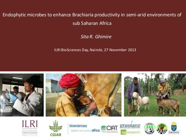 Endophytic microbes to enhance Brachiaria productivity in semi-arid environments of sub Saharan Africa Sita R. Ghimire ILR...