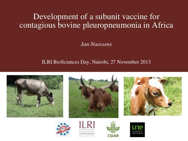 Development of a subunit vaccine for contagious bovine pleuropneumonia in Africa Jan Naessens ILRI BioSciences Day, Nairob...