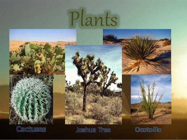 Desert biome plants list