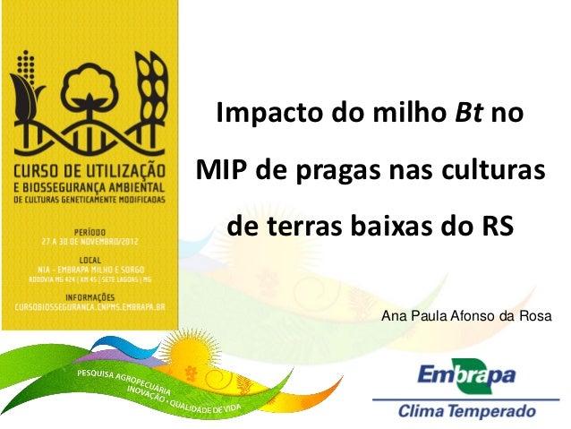 Impacto do milho Bt noMIP de pragas nas culturas  de terras baixas do RS             Ana Paula Afonso da Rosa