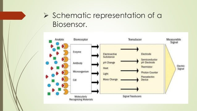 an introduction to the microbial biosensors Introduction soil ingestion (both directly and through vegetable consumption) microbial biosensors for mutagenicity assessment: mitomycin-c as a model.