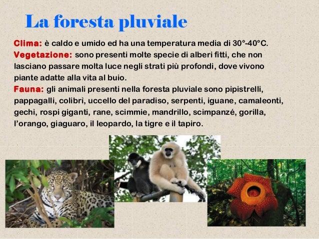 Biosfera e biomi - Gli animali della foresta pluviale di daintree ...