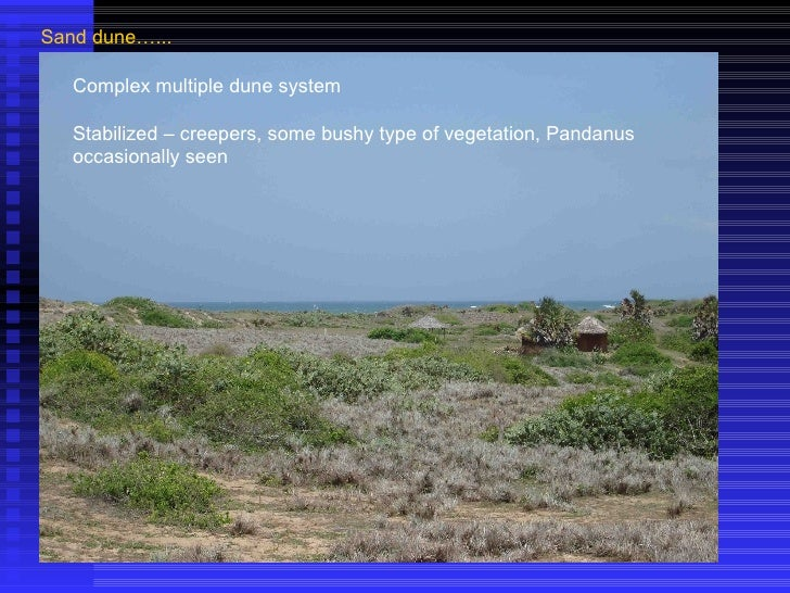 Sand dune…... Complex multiple dune system Stabilized – creepers, some bushy type of vegetation, Pandanus occasionally seen
