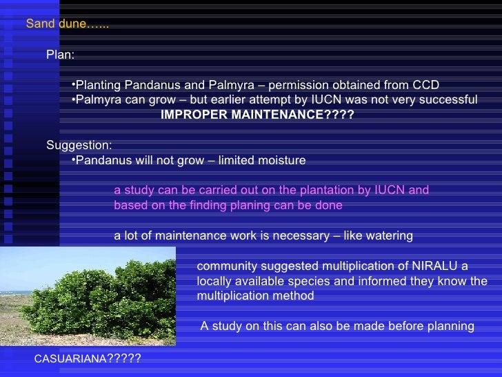 Sand dune…... <ul><li>Plan:  </li></ul><ul><ul><li>Planting Pandanus and Palmyra – permission obtained from CCD </li></ul>...