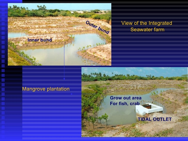 View of the Integrated  Seawater farm Inner bund TIDAL OUTLET Mangrove plantation Outer bund Grow out area For fish, crab