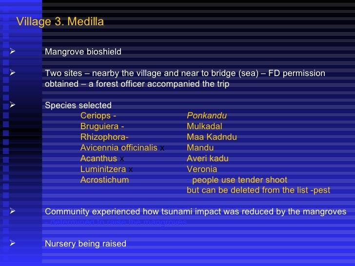 Village 3. Medilla <ul><li>Mangrove bioshield </li></ul><ul><li>Two sites – nearby the village and near to bridge (sea) – ...