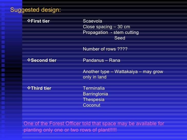Suggested design: <ul><li>First tier Scaevola </li></ul><ul><li>Close spacing – 30 cm </li></ul><ul><li>Propagation  - ste...