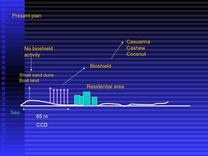 Sea Small sand dune Boat land 65 m CCD Residential area Present plan No bioshield activity Bioshield Casuarina Cashew Coco...