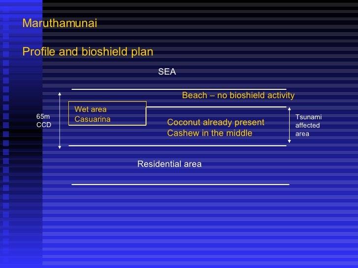 Maruthamunai Profile and bioshield plan SEA Beach – no bioshield activity Wet area Casuarina Coconut already present Cashe...