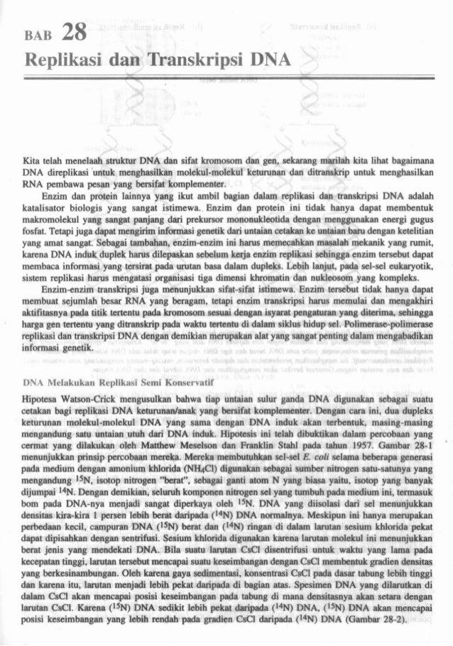 Biosintesis protein dogmasentral