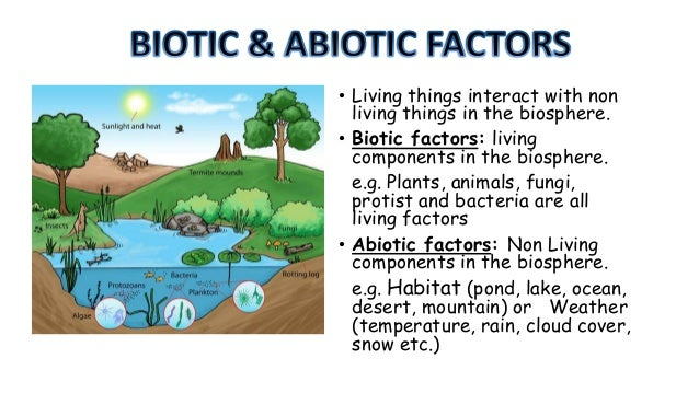 biotic and abiotic factors influencing acid rain Abiotic effects on an ecosystem  organisms role of the abiotic environment in population growth size and growth of population are affected by both biotic and abiotic factors organisms are dependent on the abiotic factors of the environment they also modify these factors  harms some substratum soil or rock acidity (ph) acid rain can make.