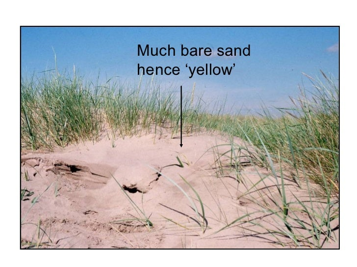sand dune succession essay Sand dunes coursework introduction - hayling island - a-level they geography coursework sand dunes are formed on large sandy shores, where the sand is able to dry out.