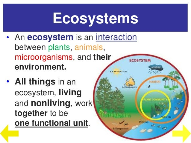 Biosphere to Ecosystems