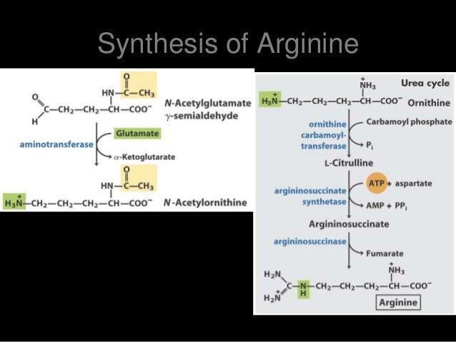 biosynthesis of amino acids pdf