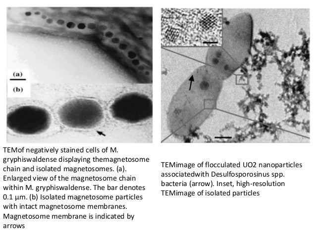 Bio Synthesis Of Nano Particles Using Bacteria